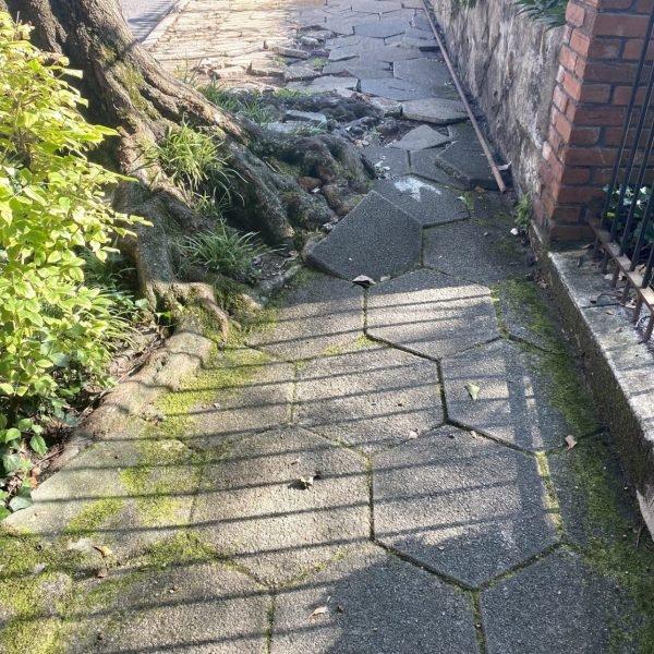Broken Sidewalk and Tree